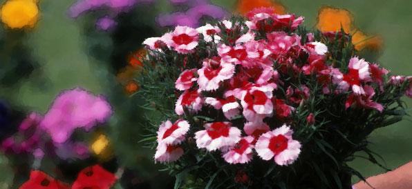 red-pink-flowers.jpg
