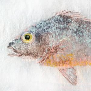 fish printing