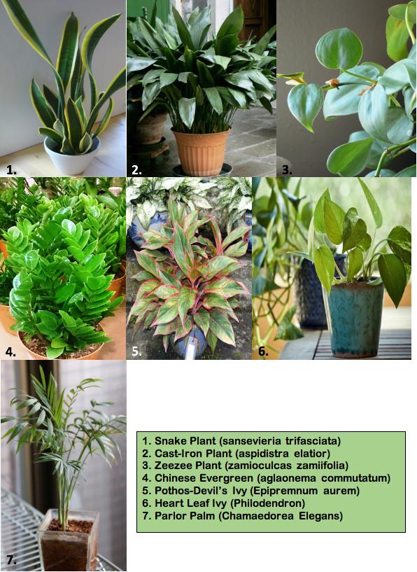 pictures of the houseplants featured in the article Tough Houseplants