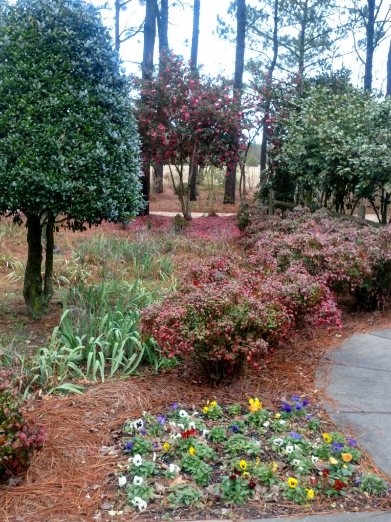 winter garden with flowers and trees