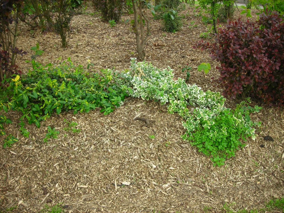 picture of plants with mulch added around them