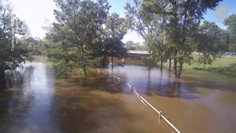 flooded area with trees in the storm water