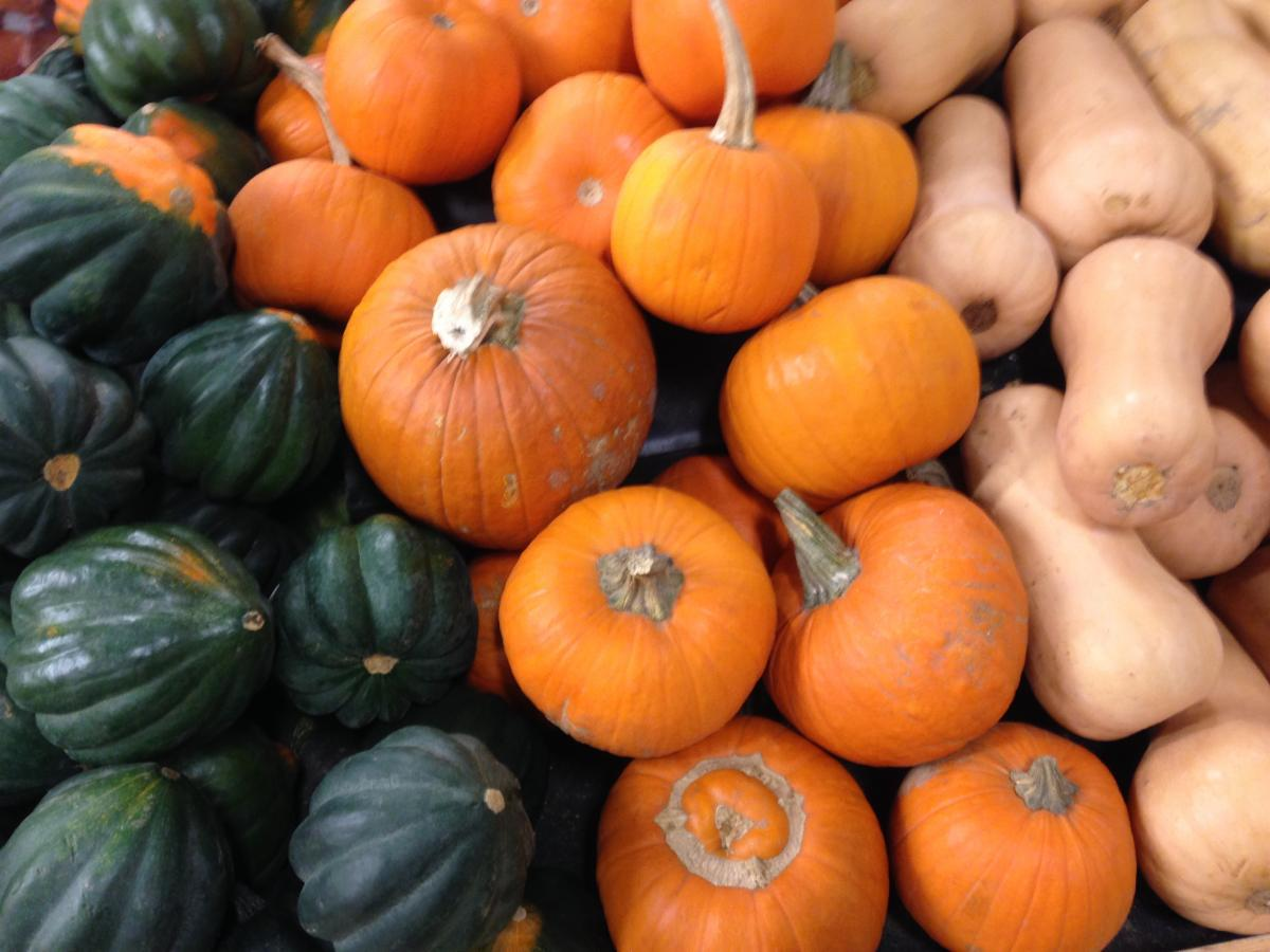 various pumpkins and winter squashes