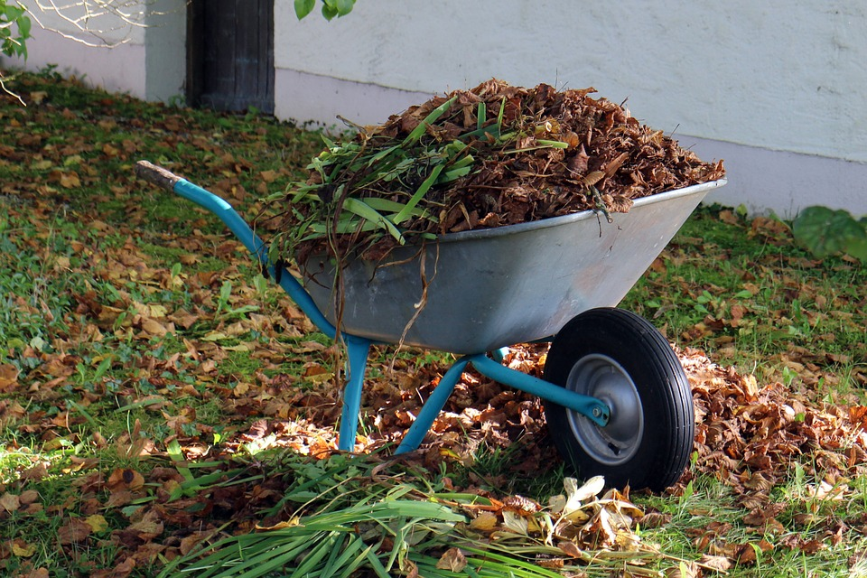 picture of light grey wheelbarrow with dead plants_weeds_ and leaves inside.