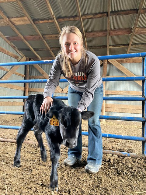 Picture of Elisabeth Gooch in blue jeans and gray long-sleeve shirt standing in a calf pen holding a black calf that is standing on it's feet. She is a student paraprofessional- joins Missouri AgrAbility to assist with social media outreach and client data