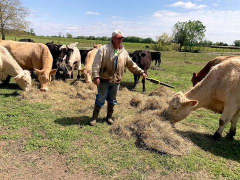 Jason Barber in a pasture surrounded by cattle grazing on hay He is wearing a white and red hat a white sweatshirt that zips up and is covered in mud while holding a wand