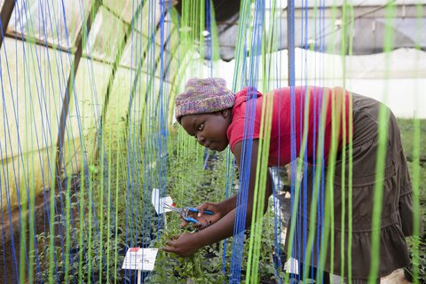 Picture of Jessica - a Ugandan woman - working in a hoop house.