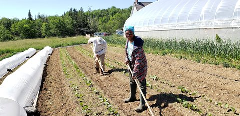 Picture of two people using long-handled hoes to hoe a garden row next to a hoop house