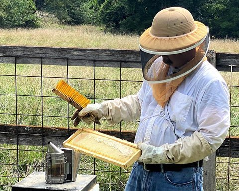 Travis Harper wearing a hat with a net falling down covering his face and neck and long rubber gloves while holding a brush and a comb of honey from his bee keeping he has a smoke can next to him to keep bees relaxed while he works on collecting the honey.