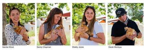 Collage of 4 interns - 3 ladies and 1 man - each holding a chicken