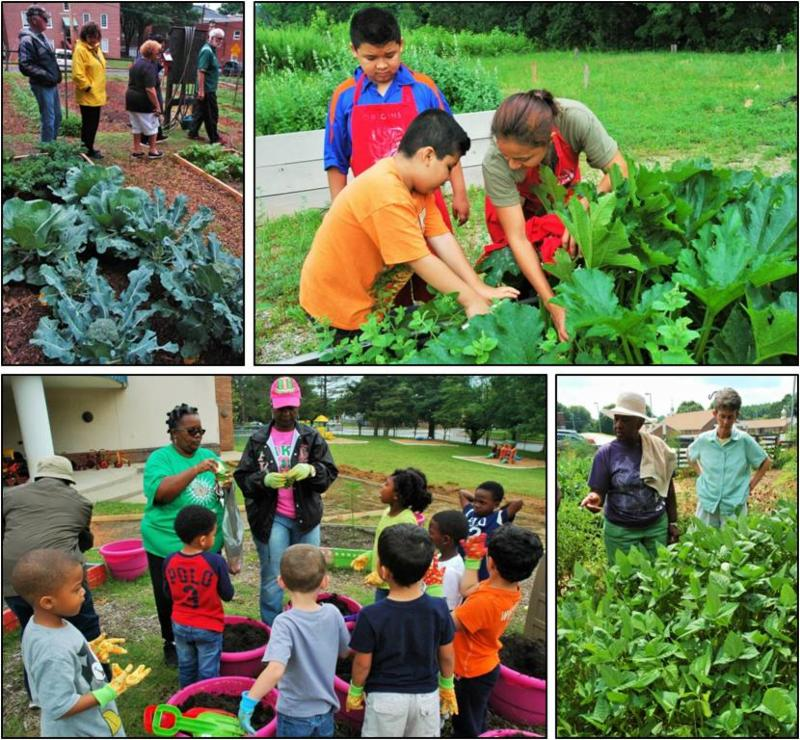 Mentors teaching others in their community gardens