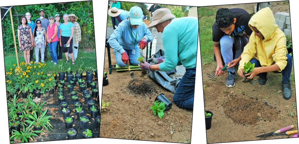 Community gardeners potting and planting native plants