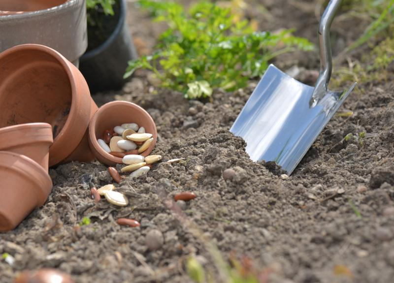 Trowel in the soil next to seeds ready for planting