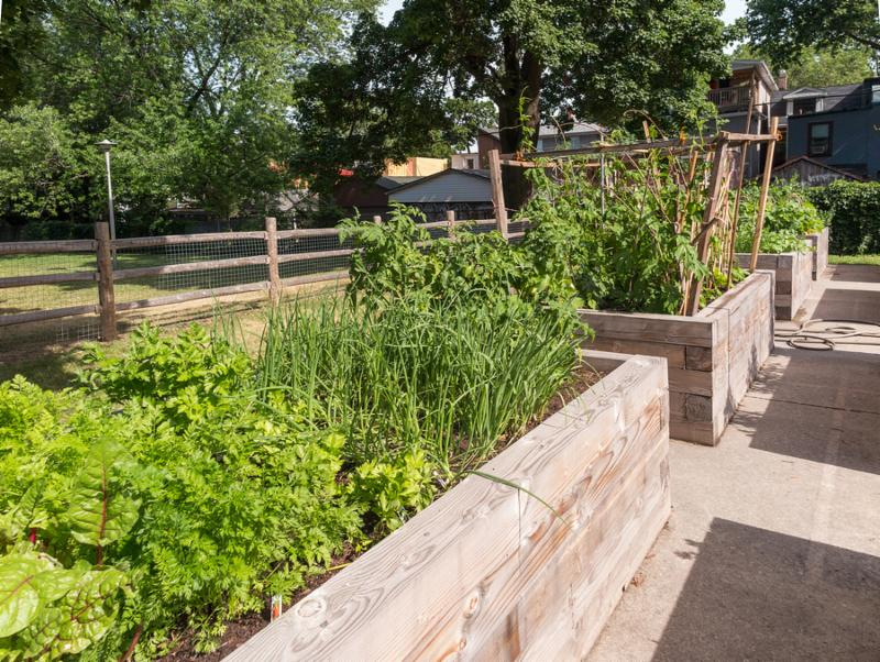Extra-tall raised garden bed with chard carrots and onions surrounded by firm path materials