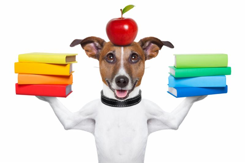 school_dog.jpg