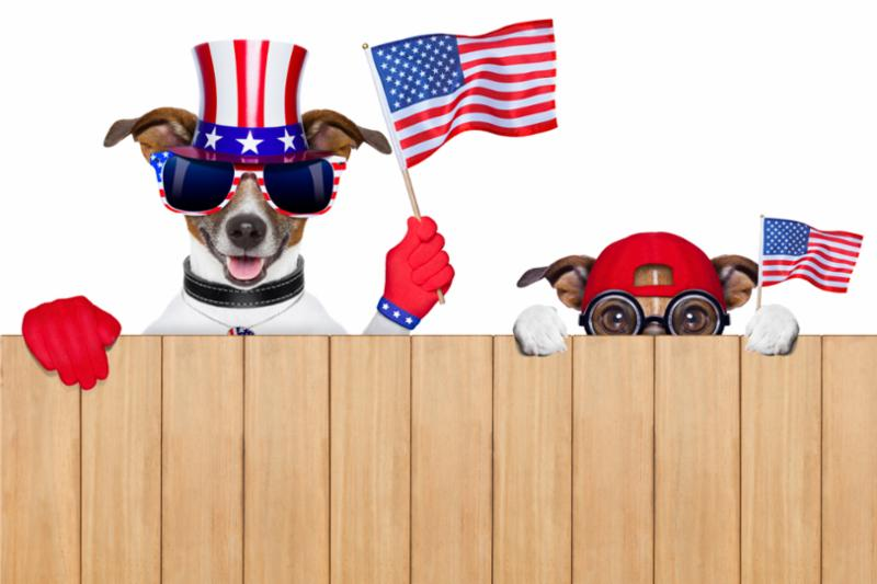 USA_dogs_behind_fence.jpg