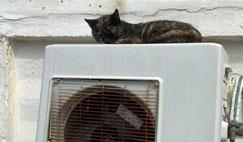 cat on old AC unit