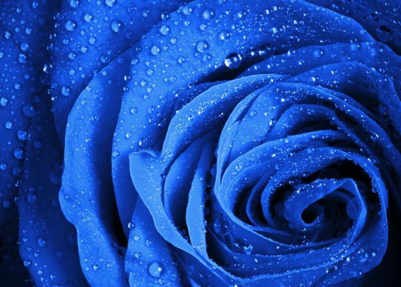 blue_rose_water.jpg