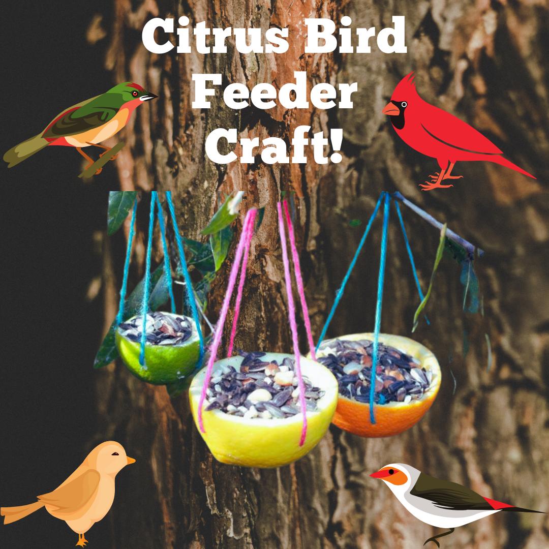 IG Citrus Bird Feeder .png