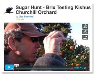 brix_video_thumbnail