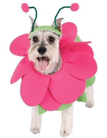 dog in easter costume