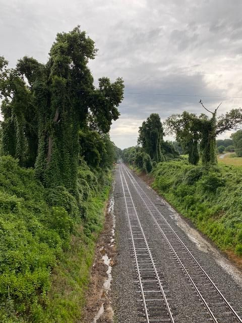 Image of train tracks and trees on a cloudy day