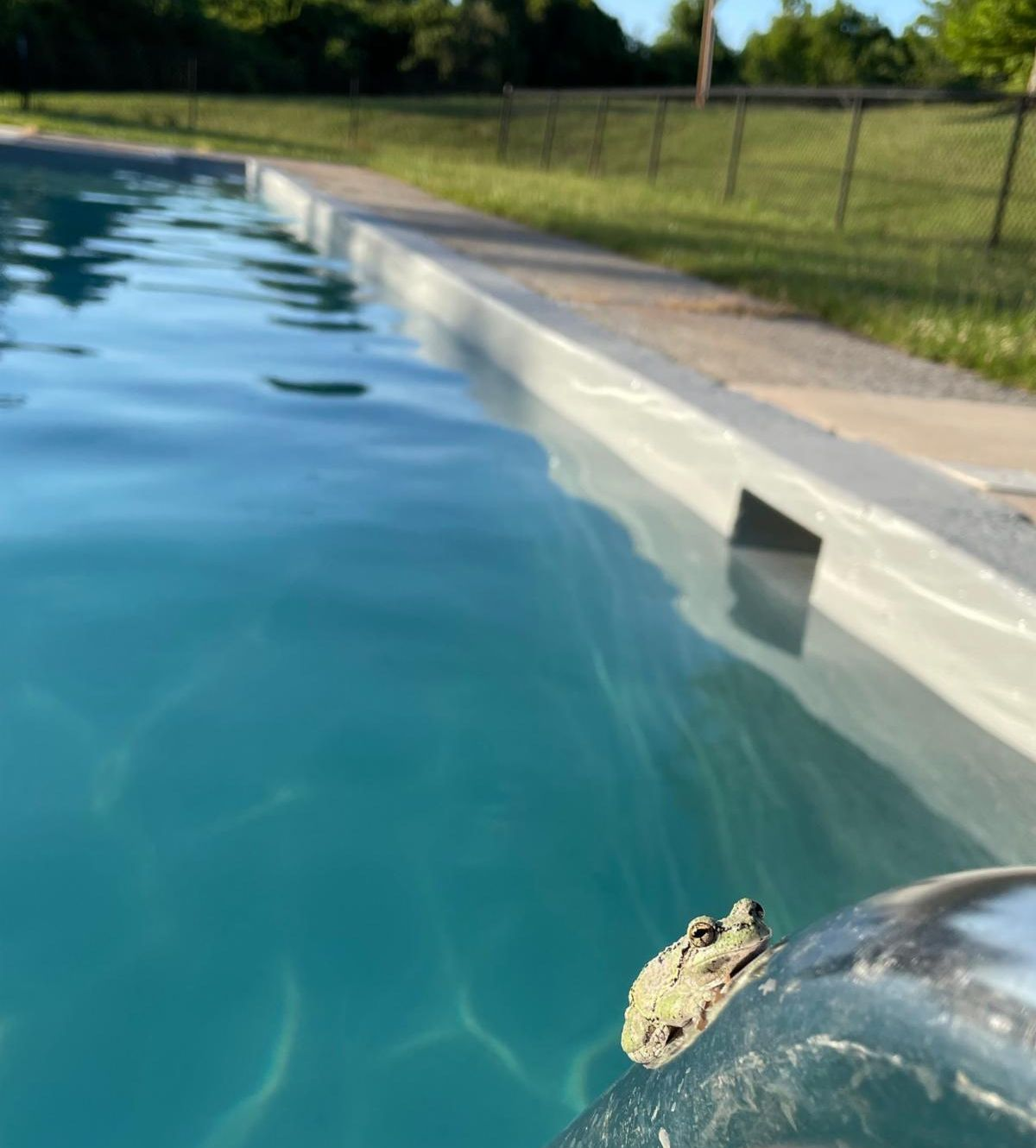 A frog sits on the rail of a pool ladder with blue water of the pool in the background.