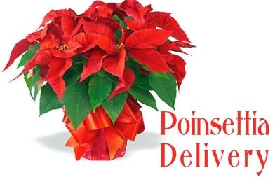 Poinsettia delivery