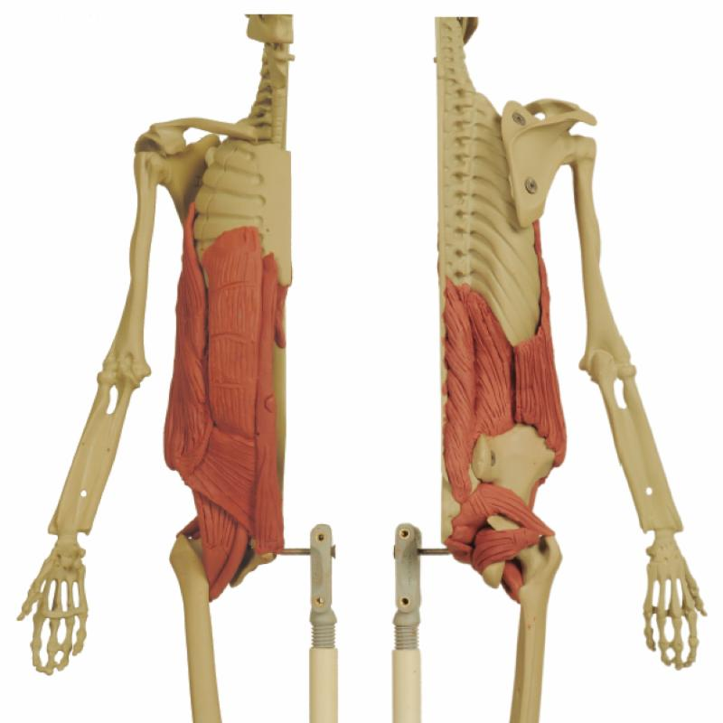 ANATOMY IN CLAY CENTERS EXCLUSIVE: Clay and Cadaver Workshops