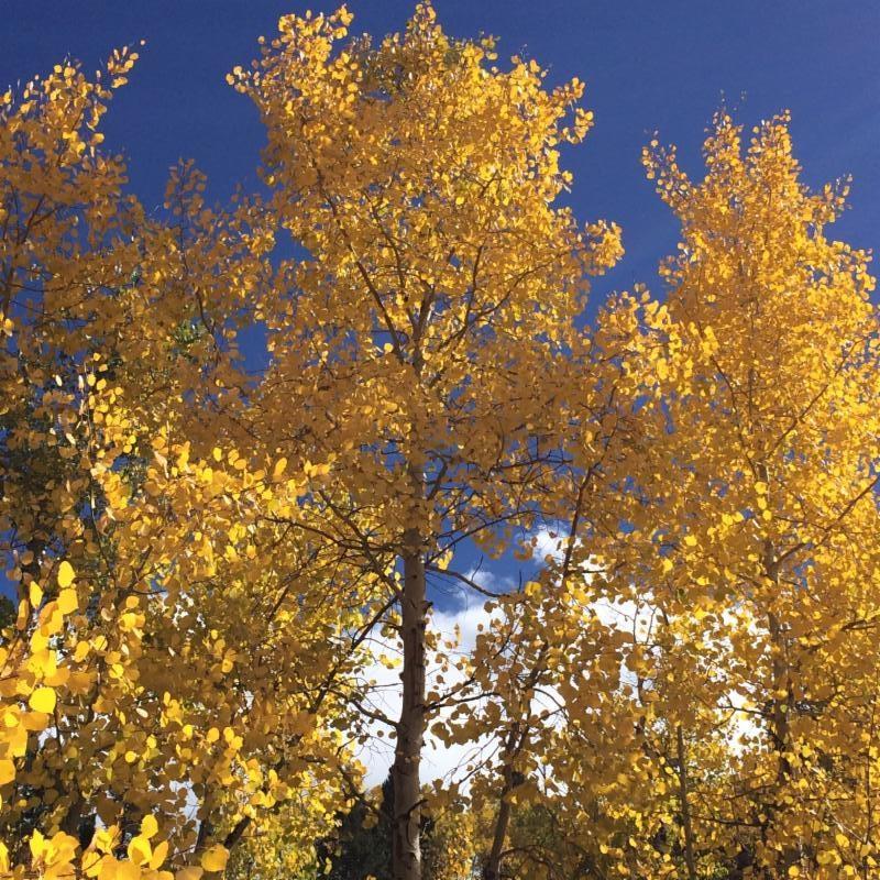 Aspen blue sky