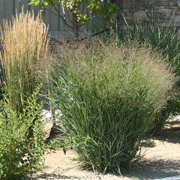 three grasses