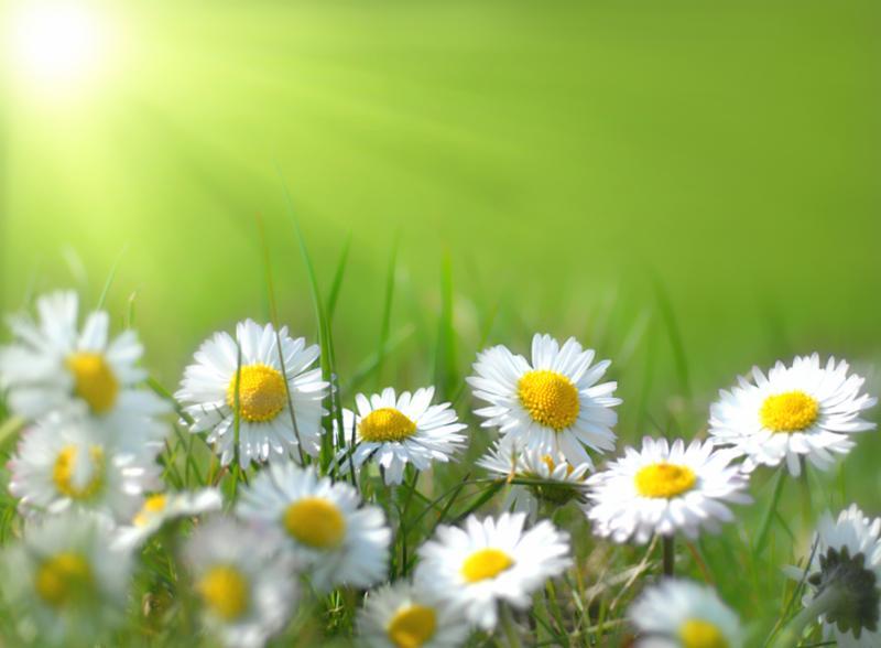 spring_flowers_field.jpg