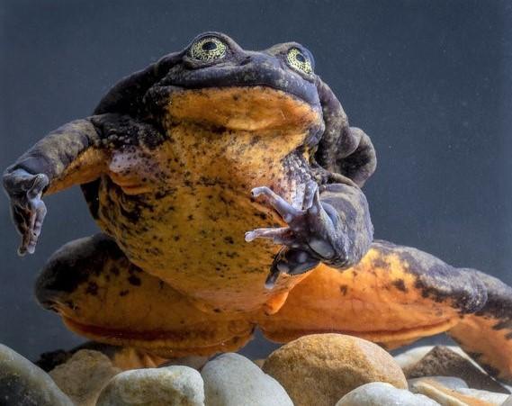 romeo the frog_ npr.org