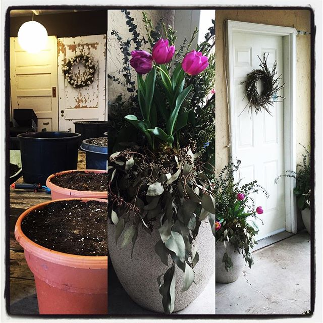 Prepping pots for spring change! Preorder on-line for pick up or delivery before Easter! #floralstudio #inspiration #crafting #aromatherapy #wreaths #outdoorarrangements #tulips #frontdoorstories #easter #spring #containergarden  frontdoorstories@gmail.