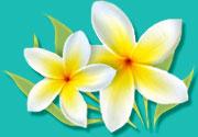 white-flower-illustration.jpg