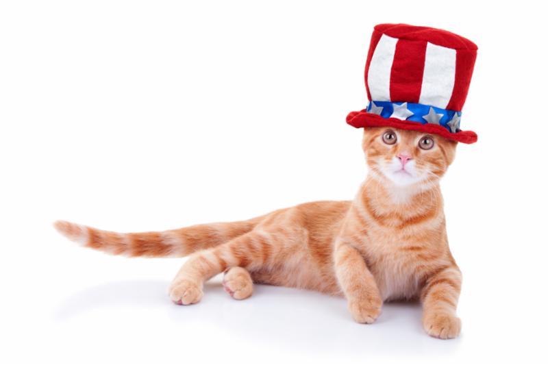 patriotic_cat.jpg
