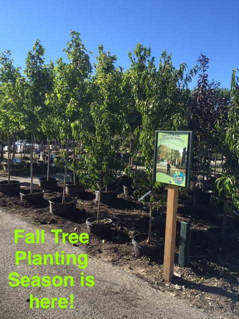 Labor Day Weekend Tree Planting Sale