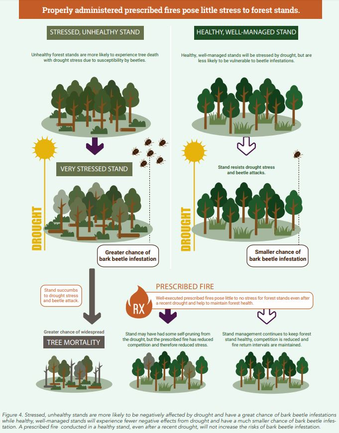 Image: Graphic from Southern Regional Extension Forestry fact sheet  Credit: SREF Forest Health Fact Sheet, Bark Beetles, Drought, and Prescribed Fire
