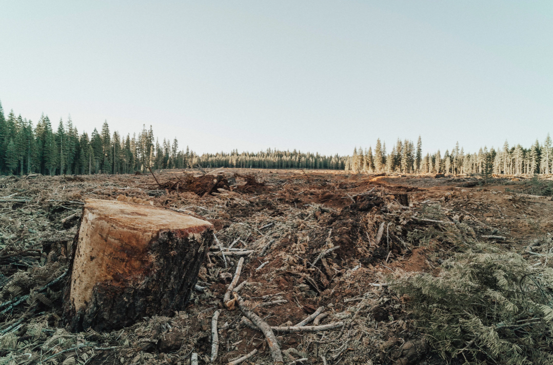 Clearcut forest from Land and Ladies article