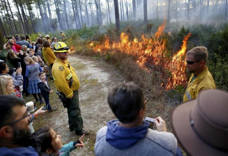 Image: Observers watch as forest rangers demonstrate a prescribed burn to an area of scrub land at the Austin Cary Forest during the Flatwoods Fire and Nature Festival Credit: Brad McClenny, The Gainsville Sun