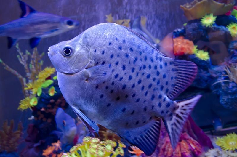 exotic_fish_aquarium.jpg
