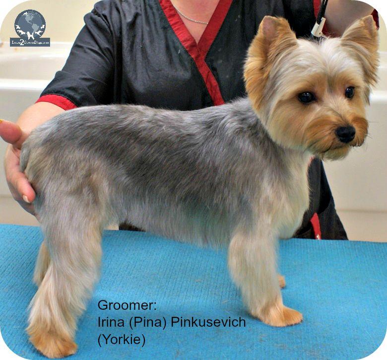 I Want A Puppy Cut