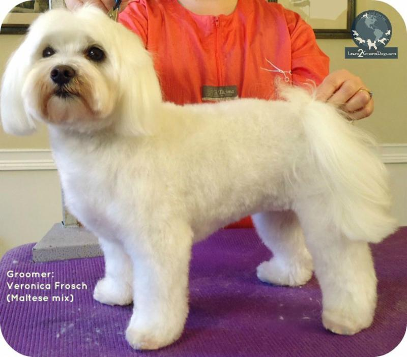 What Do You Say To Customers Who Want A Puppy Cut