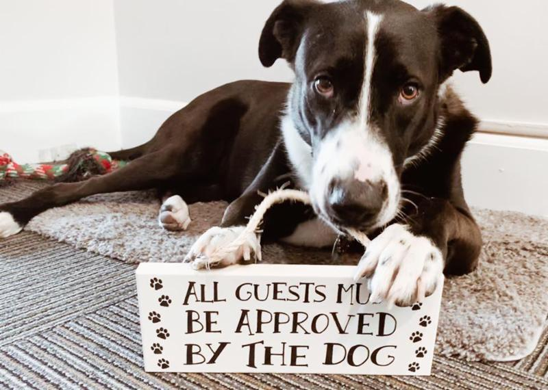Lucy with a sign in her mouth that says all guests must be approved by the dog.