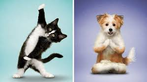 a kitten and a dog in yoga positions.