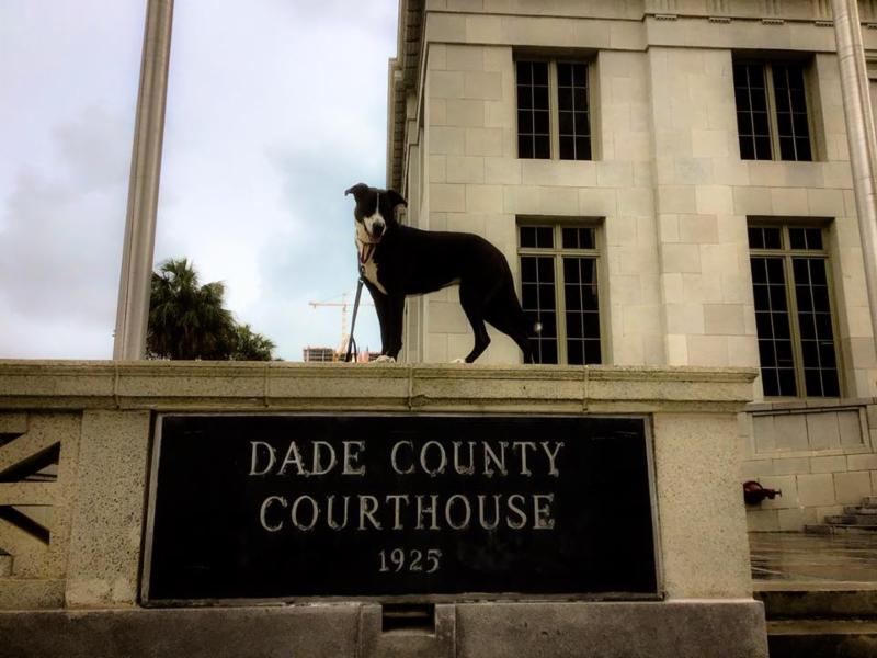 lucy the dog standing on the Dade County Courthouse sign