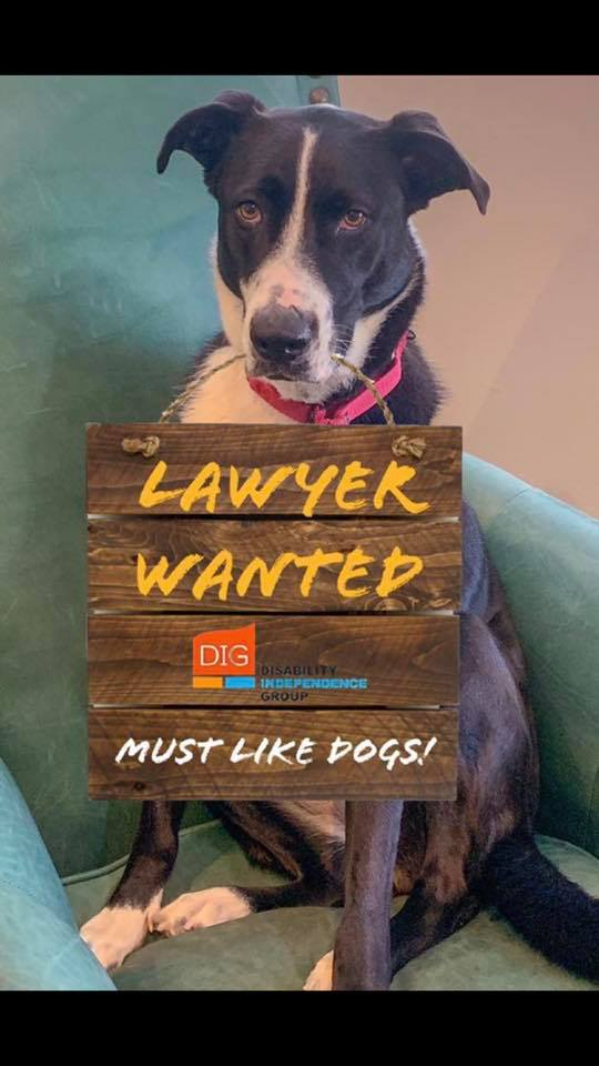 Lucy holding a sign that says lawyer wanted must like dogs