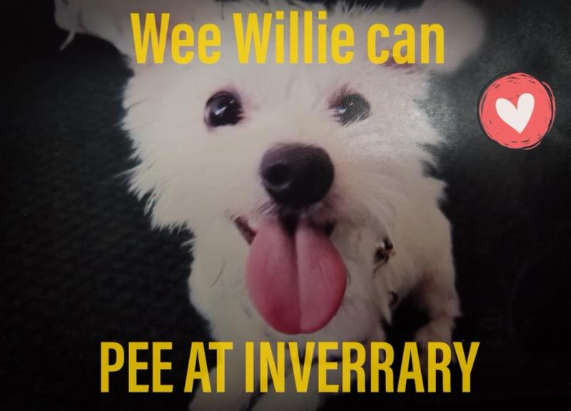 a picture of a small white fuzzy dog and a sticker of a red heart and yellow words that say Wee Willie can Pee at Inverrary