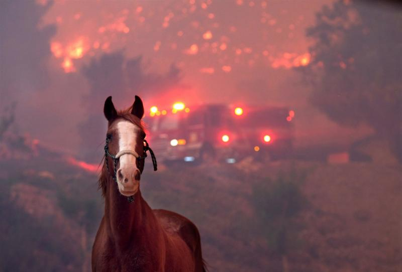 horse and in the background emergency vehicles smoke and fire