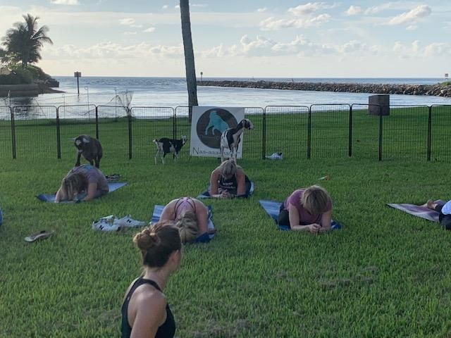 people outside doing yoga with goats climbing on their backs